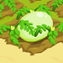 Honeydew melon 70