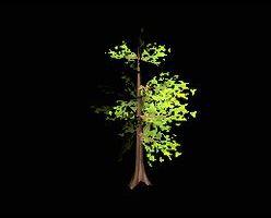 Tree branchy