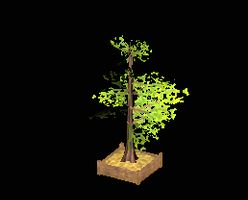 Tree branchy with planter