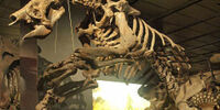 Ecuadorean Ground Sloth