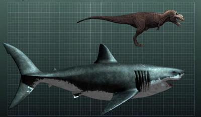 File:400px-Megalodon-shark.jpg
