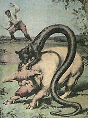 Tatzelwurm (1)