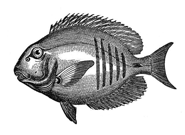 File:Fish+graphicsfairy2.jpg