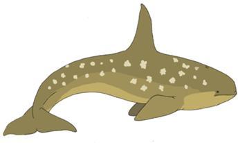 344px-Alula Whale by Pristichampsus