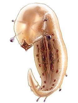 Gorryl Slug