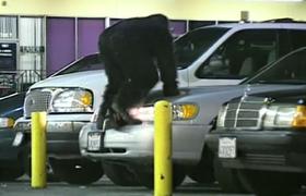 Night monkey car alarms