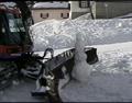 Snowcat VS Snowman.png