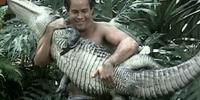 Alligatorama