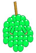 Green Grapes Costume