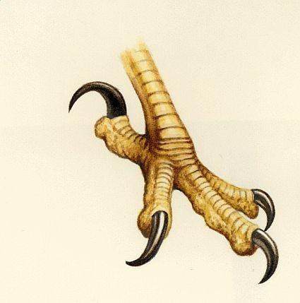 File:Talons.jpg