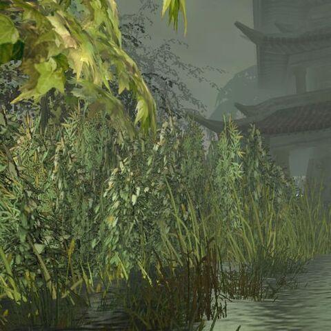 File:Swamp1.jpg