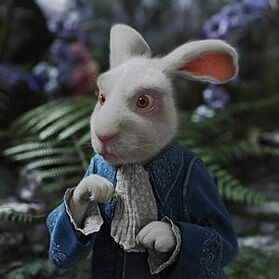 Rabbit--300x300