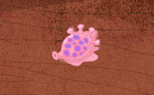 File:Hermet shell.jpg