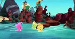 Seahorse-The Seahorse Roundup13