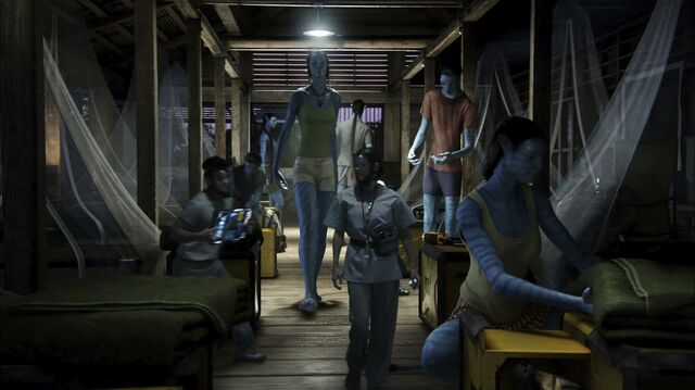 File:Avatar sleeping compound 2.jpg