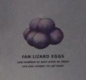 File:Fan Lizard Eggs.png