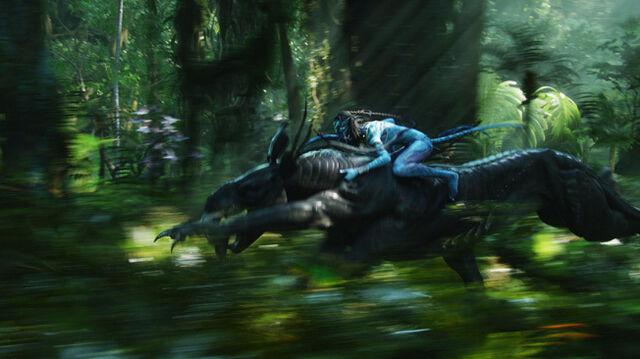 File:Neytiri-riding-on-the-thanator-james-camerons-avatar-9473095-652-366.jpg