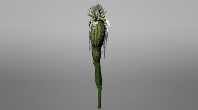 File:Pandora ROVR Thistle Bud.png