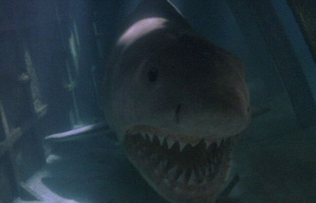 File:Great White Shark from Jaws the Revenge 3.jpg