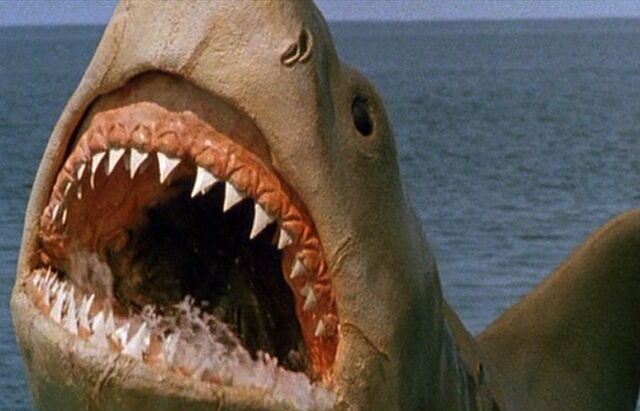 File:Great White Shark from Jaws the Revenge 1.jpg