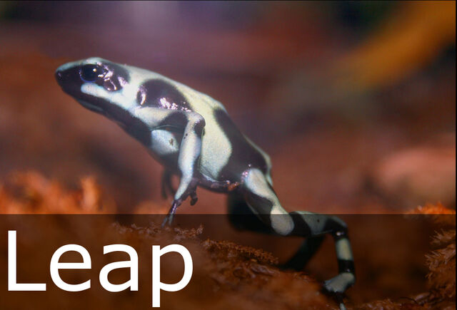 File:Leap caption.jpg