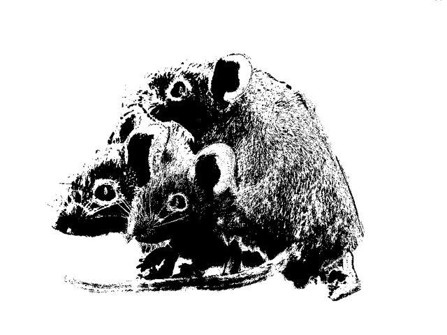 File:Three mice Silhouette.jpg