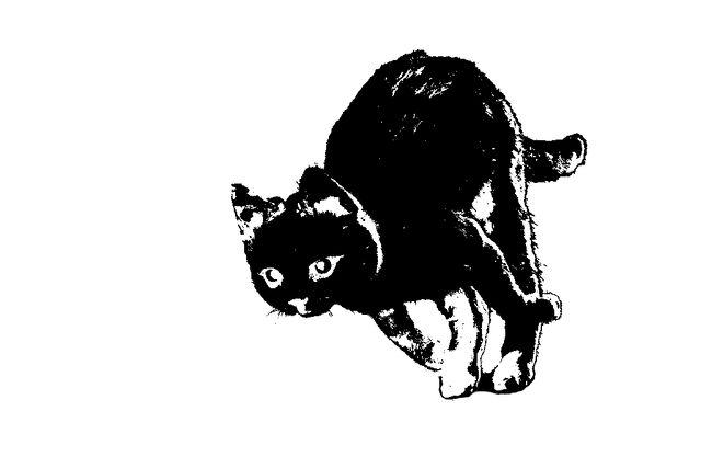 File:Running cat (stuffed) Silhouette.jpg
