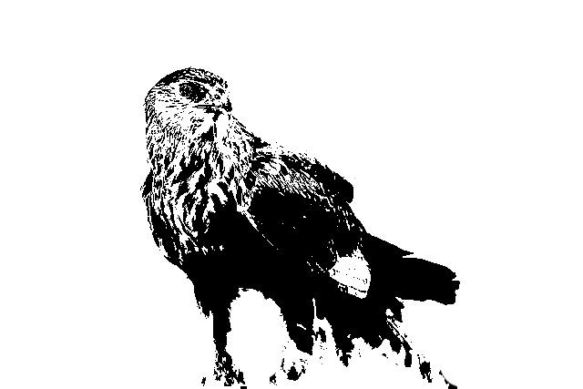File:Blotniak Stawowy silhouette.JPG