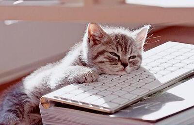 Bored-kitty