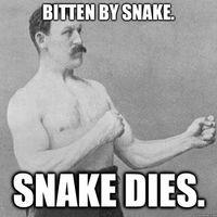 Omm-bitten-by-snake