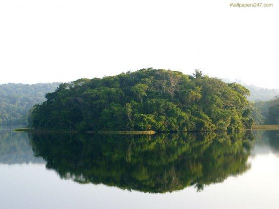 Ad054 jungle-scene-03-1024
