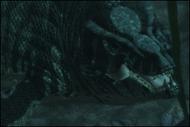 Tylosaurus Muerta