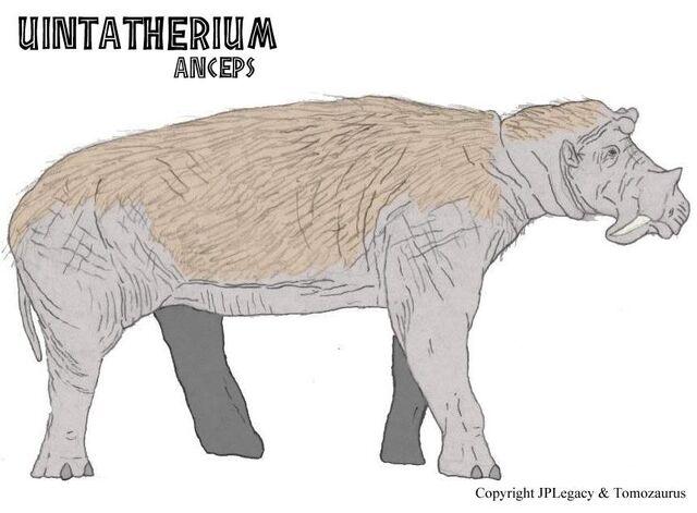 File:Uintatherium.jpg