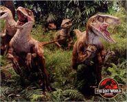 RaptorPack