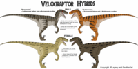Velociraptor hybrids