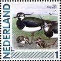 Netherlands 2011 Birds in Netherlands a30.jpg
