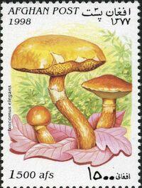 Afghanistan 1998 Mushrooms e