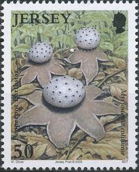 Jersey 2005 Nature - Fungi II d