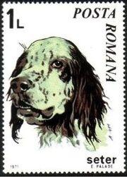 Romania 1971 Dogs d