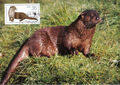Germany DDR 1987 WWF - European Otter q.jpg