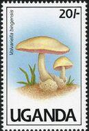 Uganda 1991 Mushrooms of Uganda a