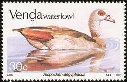 Venda 1987 Ducks d