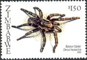 Zimbabwe 2003 Spiders a
