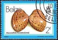 Belize 1980 Shells and Sea Snails b
