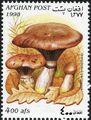Afghanistan 1998 Mushrooms a.jpg