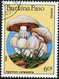 Burkina Faso 1985 Fungi d