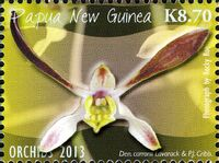 Papua New Guinea 2013 Orchids i