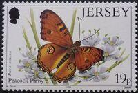 Jersey 1995 Butterflies a