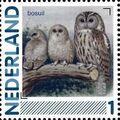 Netherlands 2011 Birds in Netherlands a7.jpg