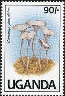 Uganda 1991 Mushrooms of Uganda c
